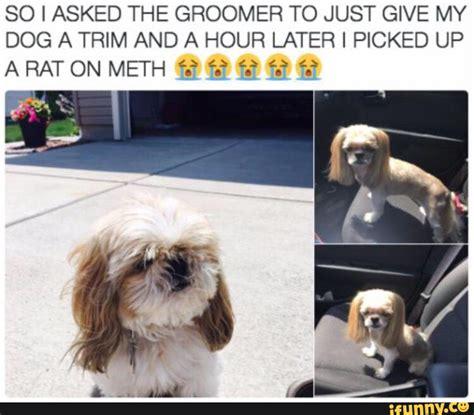 Dog Groomer Meme - groomer ifunny