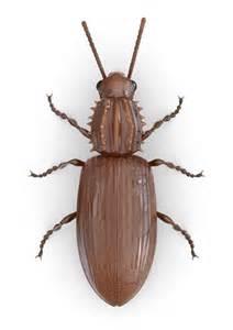 pantry pests raid 174 bug id raid 174 brand sc johnson