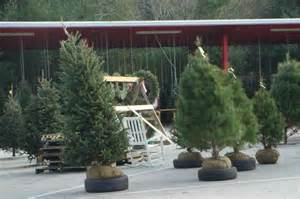 selection and care of living christmas trees nc state
