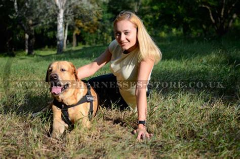 best harness for golden retriever www dogbreedspicture net 522 connection timed out
