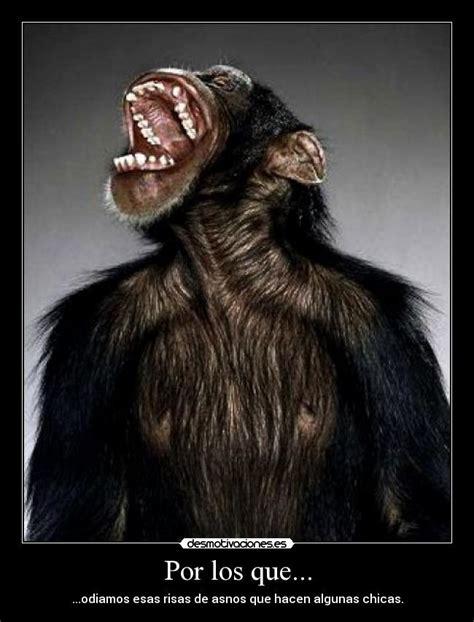 fotos animales riendose im 225 genes y carteles de riendose pag 8 desmotivaciones