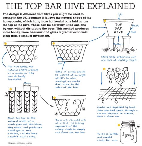 how to make a top bar beehive top bar hives bee lore