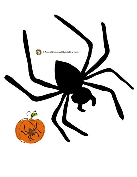 spider pumpkin template woo jr kids activities