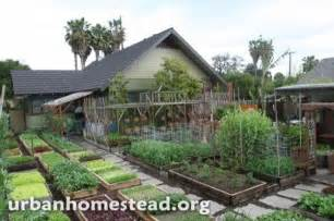 Backyard Chicken Farming Family Grows 6000 Lbs Of Food On 1 10th Acre Urban Farm