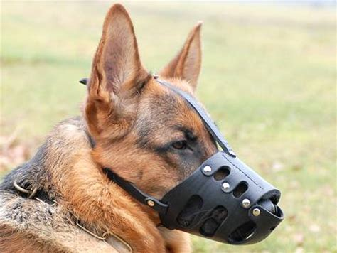puppy muzzle everyday german shepherd leather muzzle gsd muzzle m11 1060 german shepherd