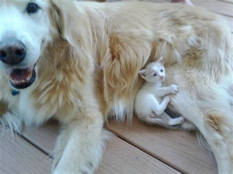 dogs that get along with cats cats and dogs get along 35 pics amazing creatures