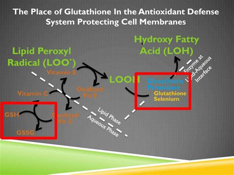 Cellar Antioxidant Defense And Detoxication System In The by The Antioxidant System Chris Masterjohn Phd