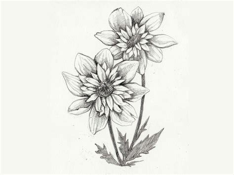 gray tattoo designs flower sunflower drawing design pictures www