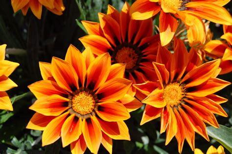 Welche Balkonpflanzen Vertragen Viel Sonne by Kaliebes Blumenhaus 220 Ber Uns