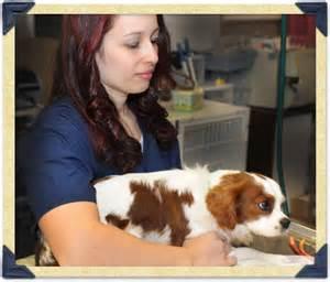 Garden State Veterinary Iselin Boulevard Veterinary Clinic Kenilworth Nj Pet Hospital