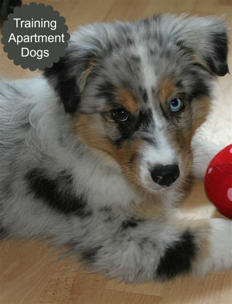 appartment dog five ways to make your apartment dog friendly dog vills