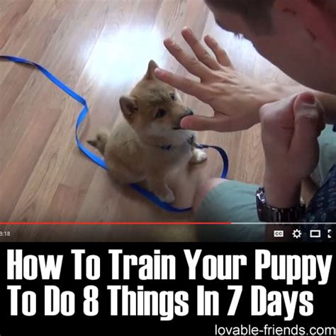 how to discipline puppy how to your puppy to do 8 things in 7 days lovable