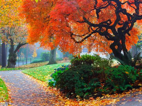 Amazing Color For The Fall Landscape Landscaping Ideas | amazing color for the fall landscape landscaping ideas