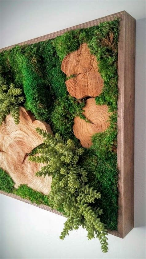 amazing diy moss projects    beginners