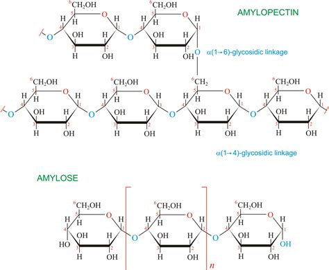 carbohydrates in xanthan gum polysaccharides study material for iit jee askiitians