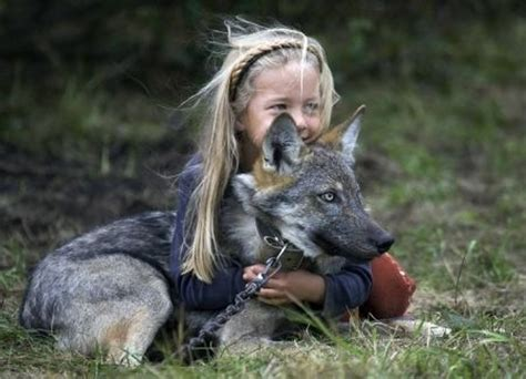 are wolves dogs how different are dogs from wolves canis lupus hominis
