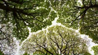 Tree Canopy Tree 1 Photo 1 Day