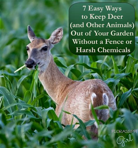 How To Keep Animals Out Of Garden by Florassippi 7 Easy Ways To Keep Deer And Other