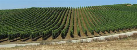 regolamento interno consorzio consorzio di tutela vini sicilia doc