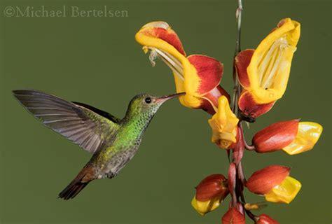wwwwild bird photocom3gp birds of costa rica photography workshop
