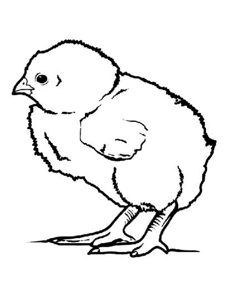 little baby chick coloring page kid coloring pages and