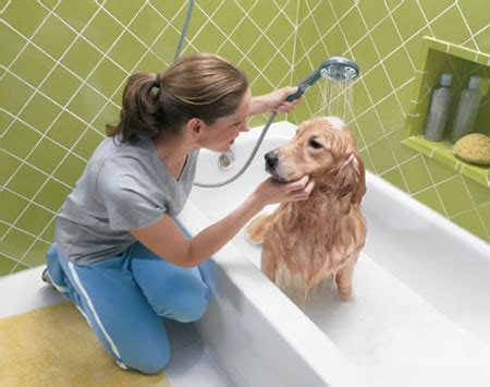 bathtub dog services available from dog grooming noosa dog grooming