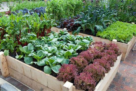 oklahoma vegetable garden planning guide gardening