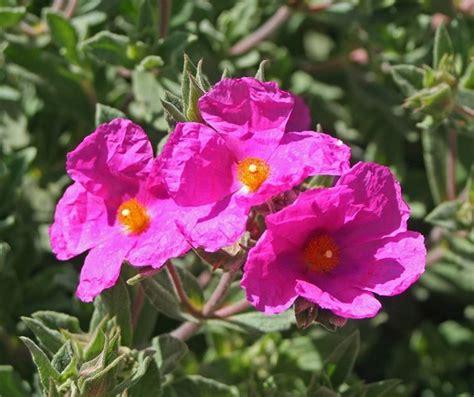gocce fiori di bach gocce di bach piante officinali cosa sono le gocce di