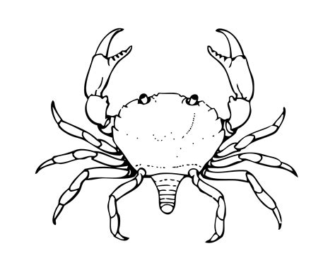 coloring pages of land animals land animals coloring pages land best free coloring pages