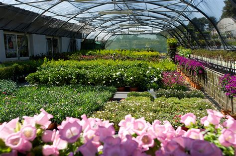 ingrosso fiori ingrosso fiori roma flora olanda flora olanda ingrosso