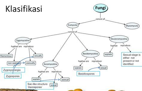 Rautan Bentuk Jamur 2 Lubang masa depan tugas parasit kelompok 3