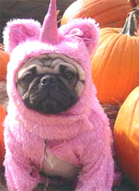 pug in unicorn costume sheldon 174 comic daily webcomic by dave kellett