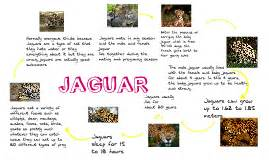 Jaguar Cycle Pictures Jaguar Cycle By Cox On Prezi