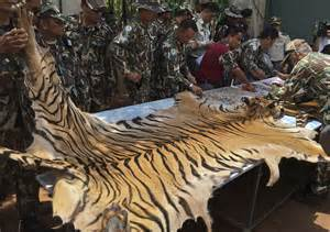 Lion Skin Rug Tiger Temple Three Monks Charged Over Alleged Smuggling