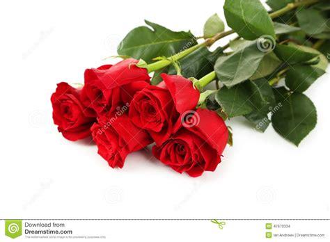 imagenes de rosas rojas frescas cinco rosas rojas frescas en el fondo blanco cierre para