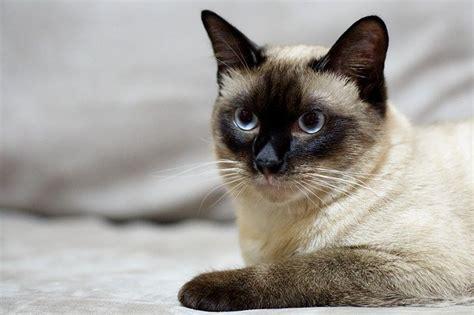 alimentazione gatto adulto alimentazione casalinga gatto adulto dogalize