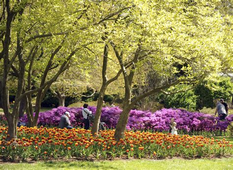 Garden Baltimore by Blooms At Sherwood Gardens Through The Years