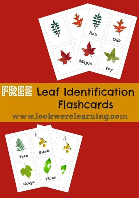 printable montessori flashcards 105 best images about montessori bot 225 nica on pinterest