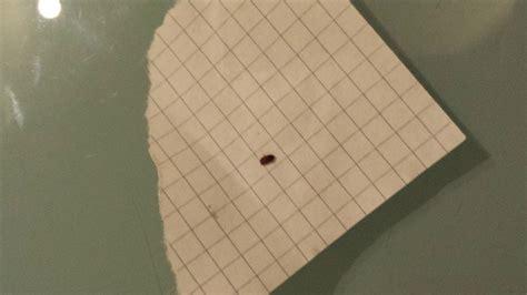 insetti da casa insetti in casa pungono secondo voi pestforum