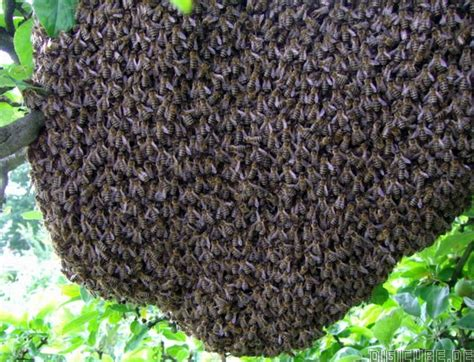 wespenplage in der wohnung wespennest was tun umgang mit wespen haushaltsmitteln zum