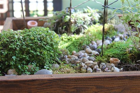 miniature indoor plants terrariums and other small space and urban gardening