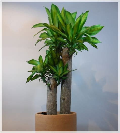 imagenes de plantas verdes de interior pasos a seguir para sacar fuera las plantas de interior