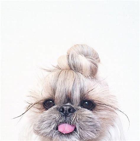 imagenes hipster tumblr animales la moda hipster de los mo 241 os 161 161 llega a los perros