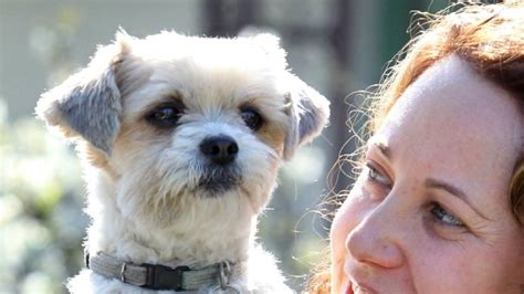 shih tzu perth poisoning suspect faces court perth now