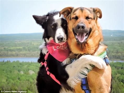 two dogs dogs lottie and grizzly live in ontario canada with owner duguay daily mail