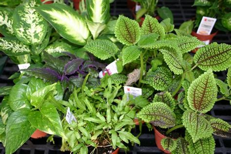 Low Light Outdoor Plants by Pin House Plants Low Light High Humidity On