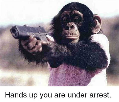 you are arrest up you are arrest meme on sizzle