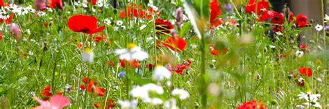 Garden Services by Garden Maintenance Services Petworth West Sussex