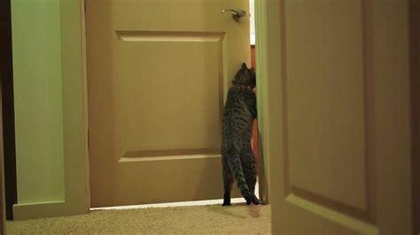 Closed Doors by Oskar The Blind Cat Opening A Closed Door