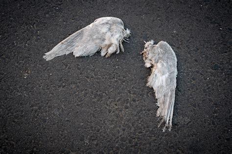 imagenes impactantes de un angel caido calados hasta los versos 2015
